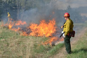 Controlled_burn_article_photo