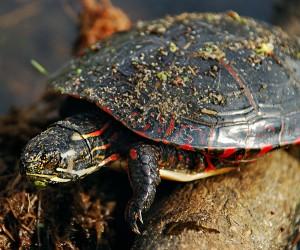 turtle-2013